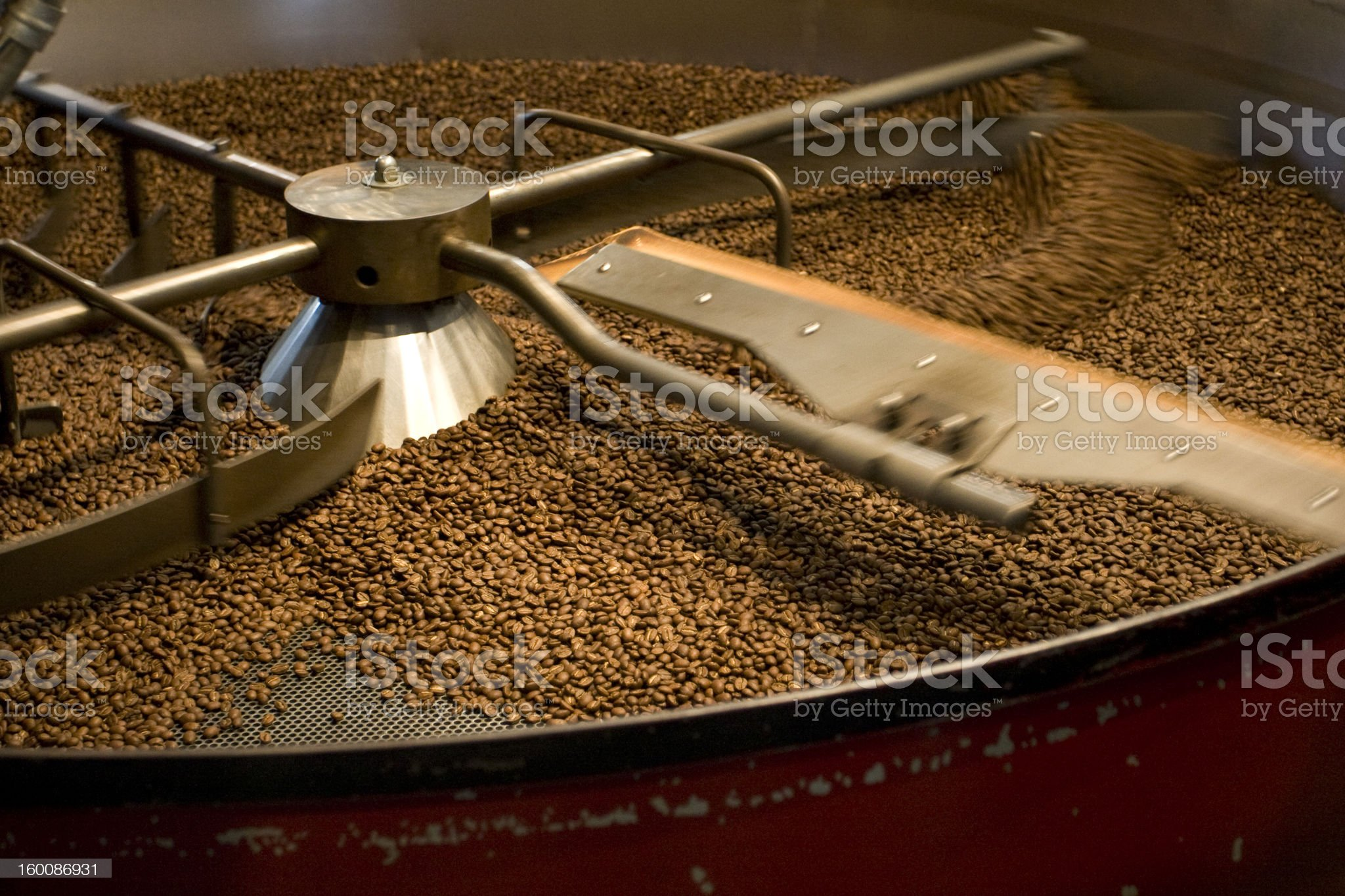 Freshly Roasted Coffee Beans royalty-free stock photo