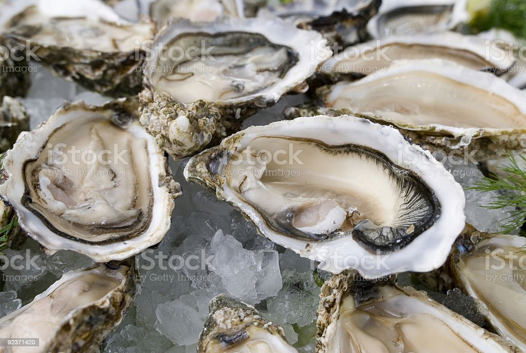 Freshly shucked oysters on crushed ice stock photo