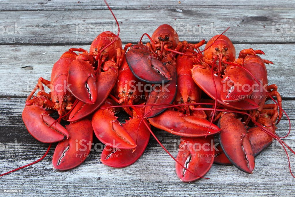 Freshly Steamed Lobsters - Clustered Together stock photo