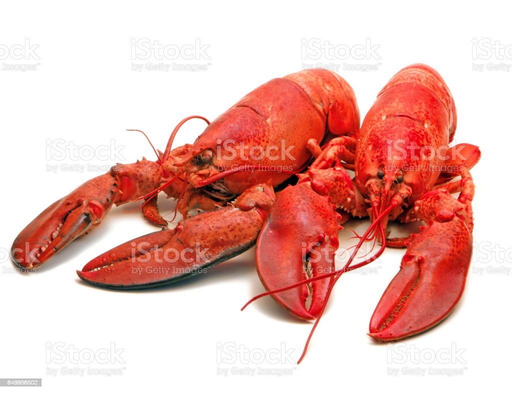 Freshly Steamed Twin Lobsters (2) stock photo