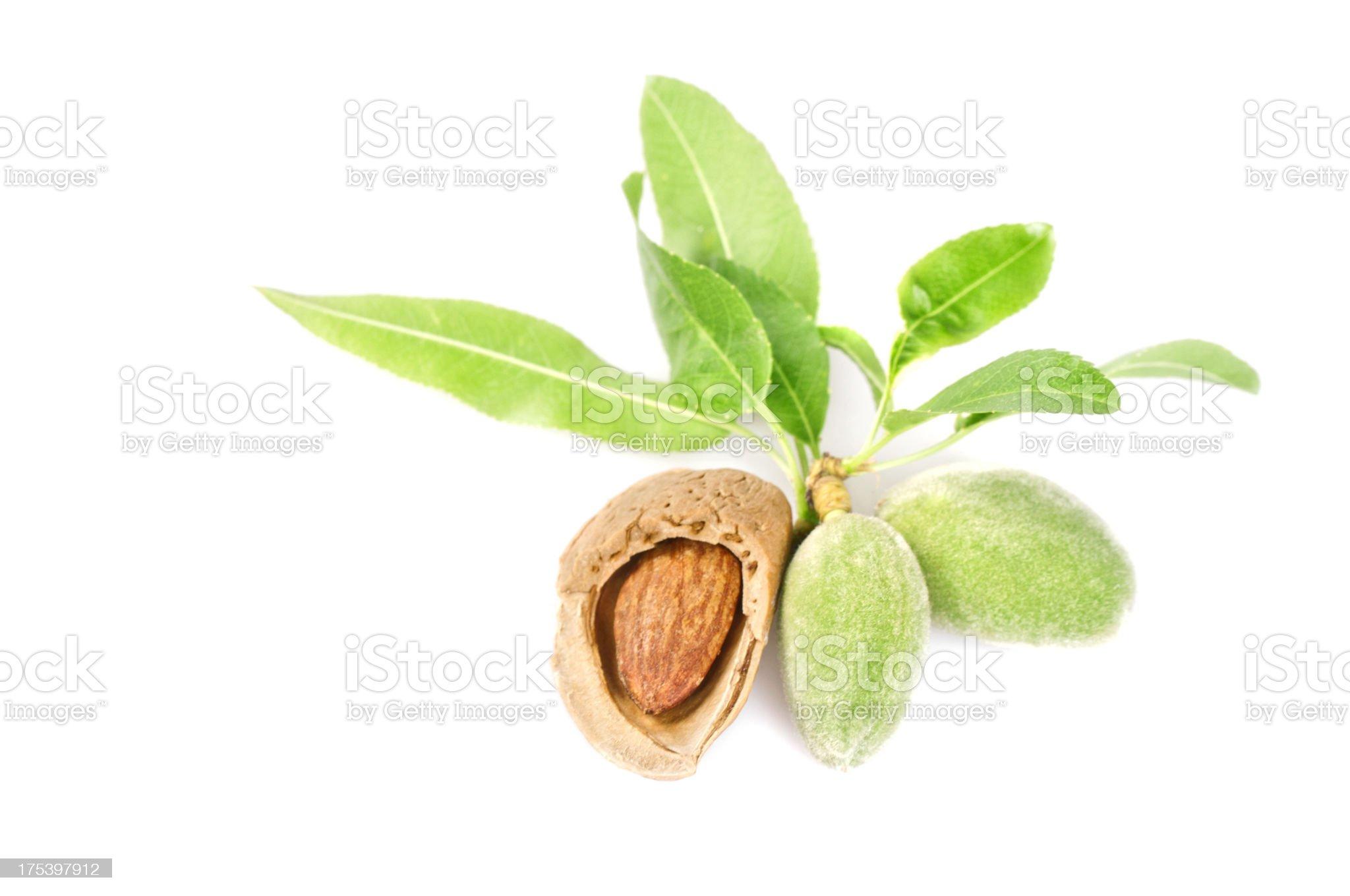 Freshness almonds royalty-free stock photo