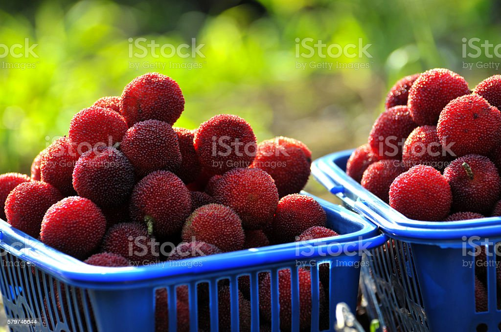 Freshness arbutus stock photo