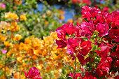 Freshness Flowers in the Garden