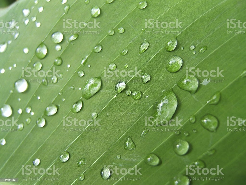 Freshness organic background royalty-free stock photo