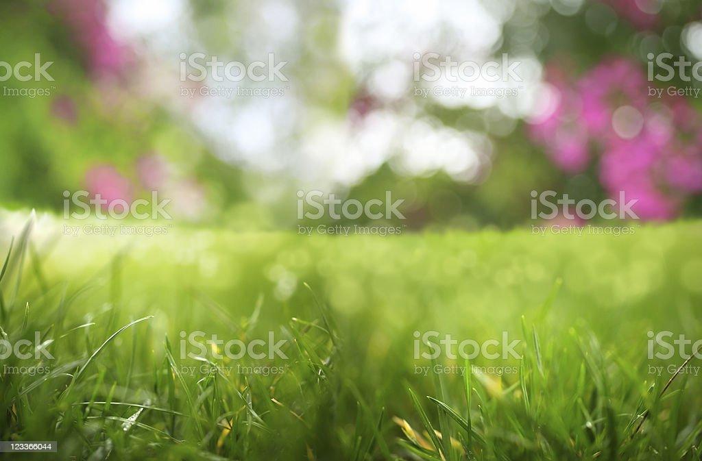 freshness stock photo