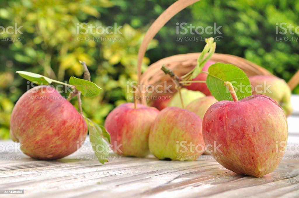 freshness red apples stock photo