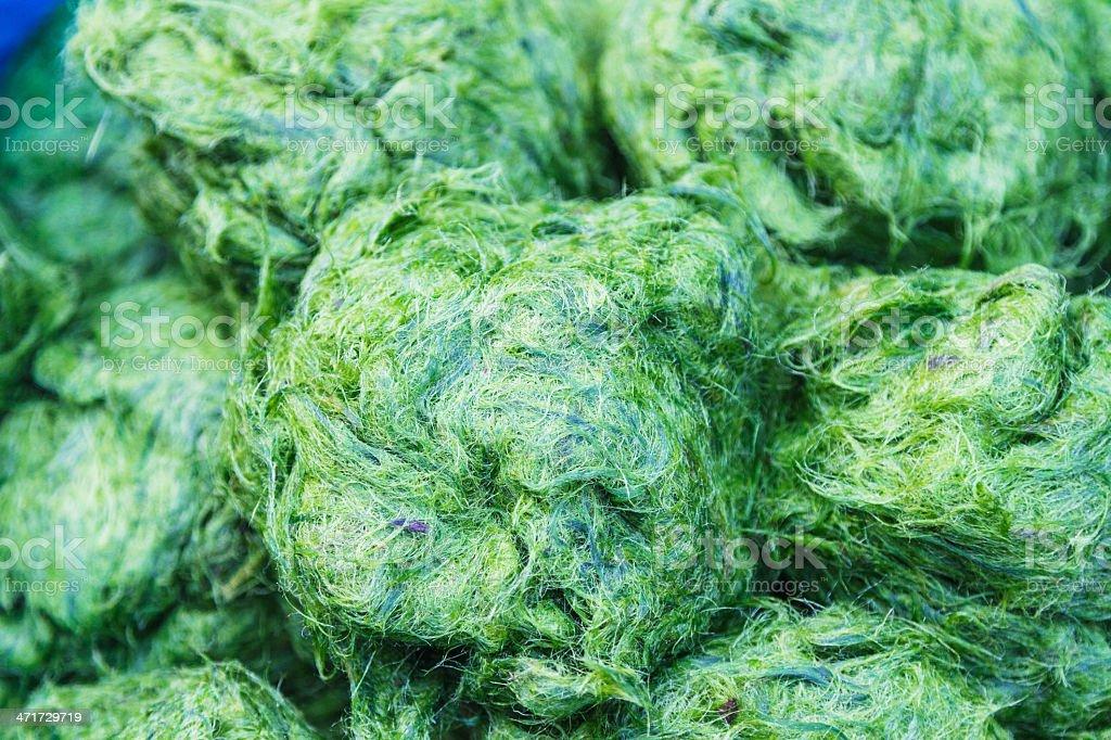 freshwater algae stock photo