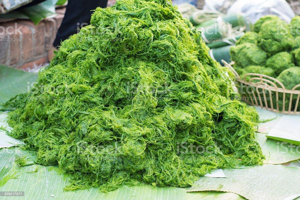 Freshwater algae (Spirogyra neglecta) stock photo