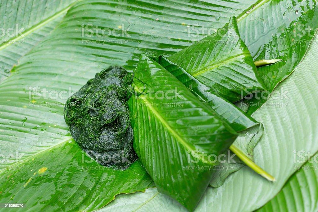 Freshwater algae (Spirogyra sp.) ready is used to make food stock photo