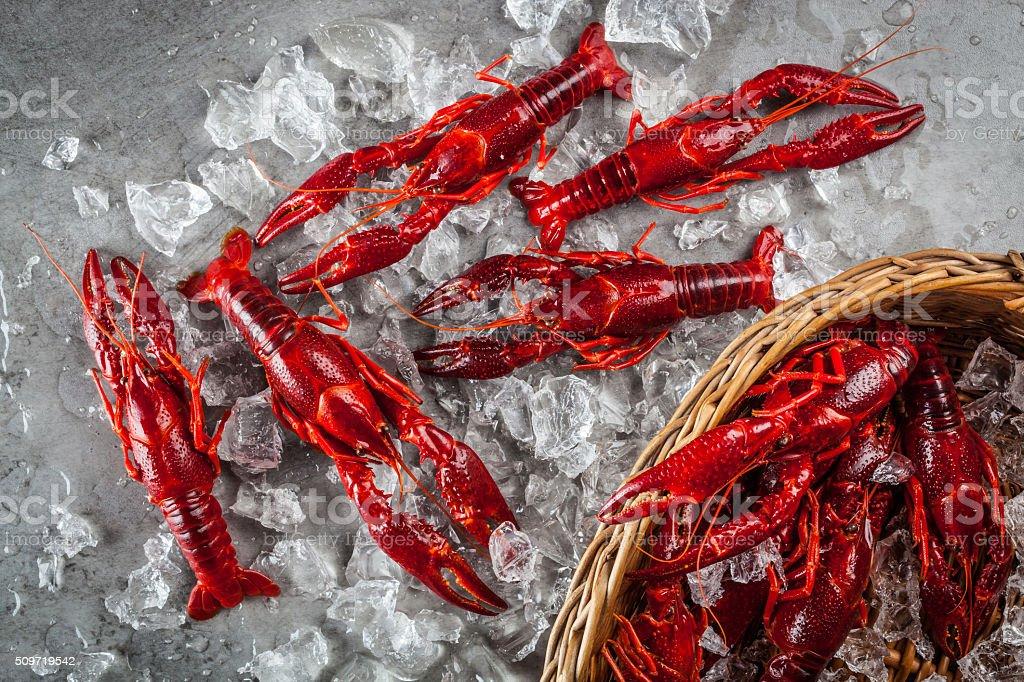 Freshwater crayfish stock photo