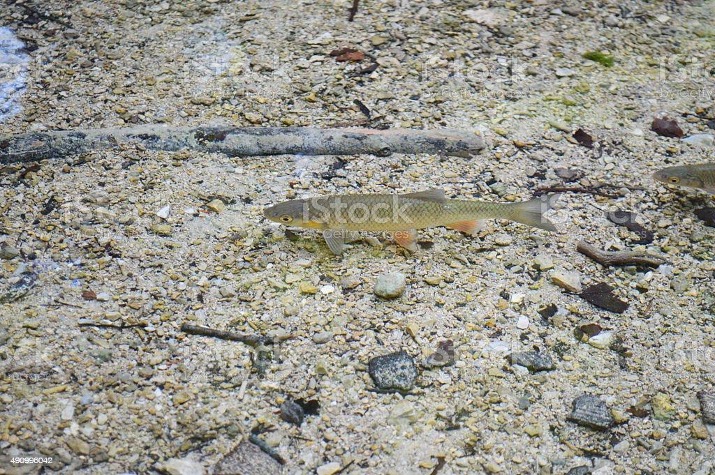 Pescar en el lago de agua dulce de Croacia foto de stock libre de derechos