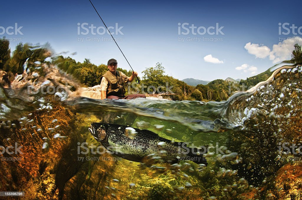 Freshwater fish stock photo