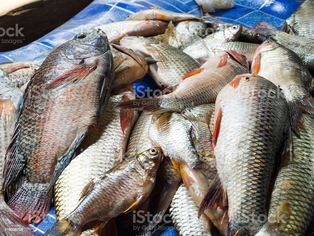 Freshwater fish that were captured for sale. stock photo