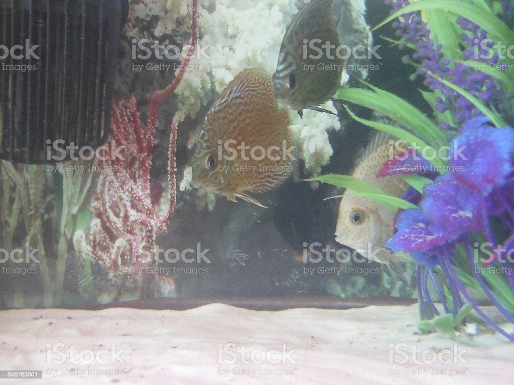 Freshwater fishes! stock photo