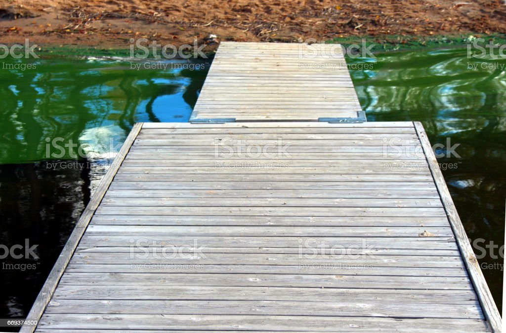 Freshwater Lake with a bridge and a dense bloom of green algae. stock photo
