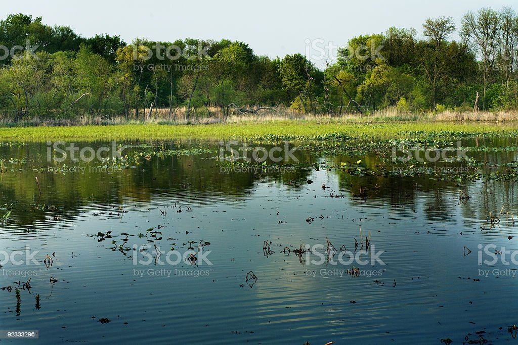 freshwater tidal wetland royalty-free stock photo