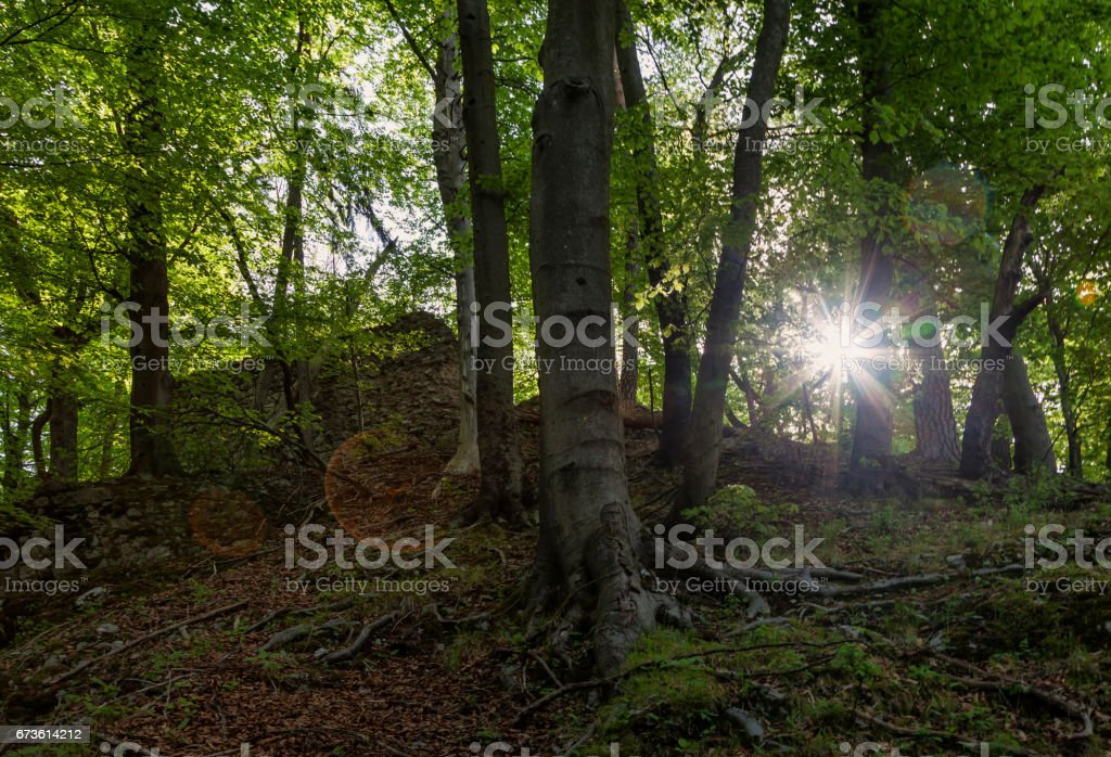 Frühling im Wald stock photo