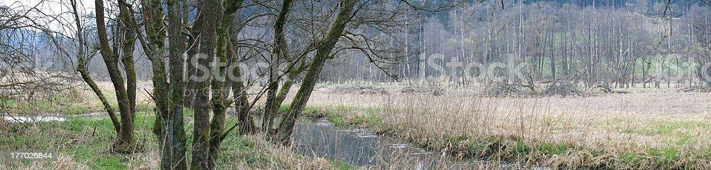 Frühling royalty-free stock photo