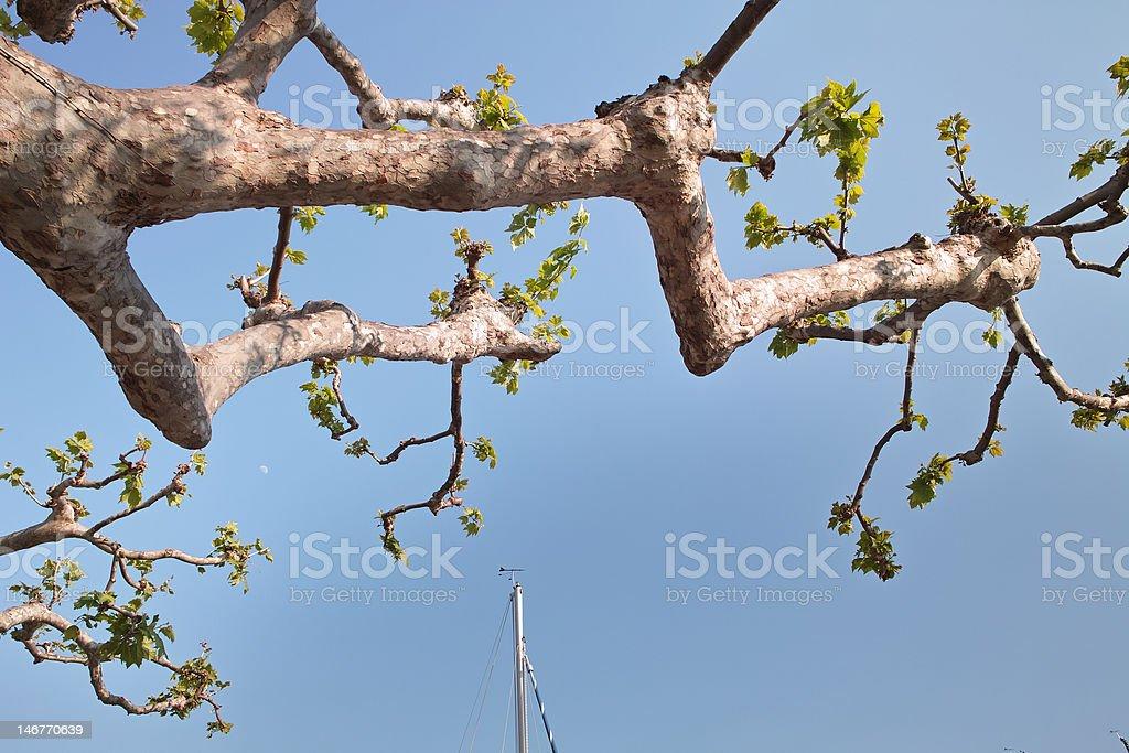 Frühlingsbaum stock photo