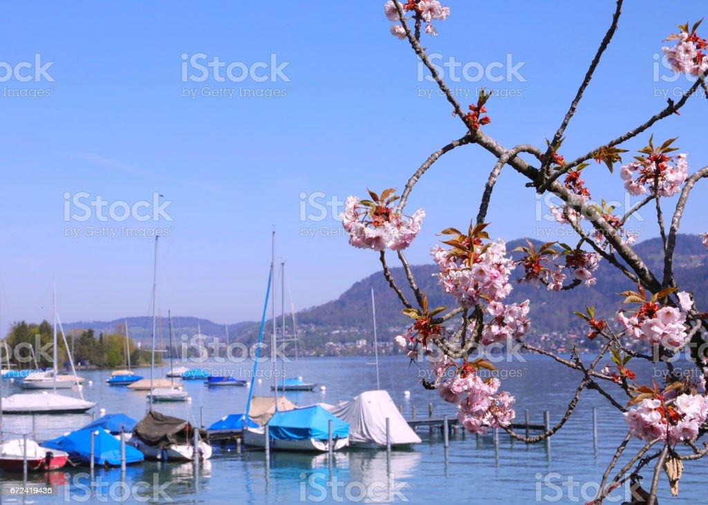 Frühlingsbild am Hafen stock photo