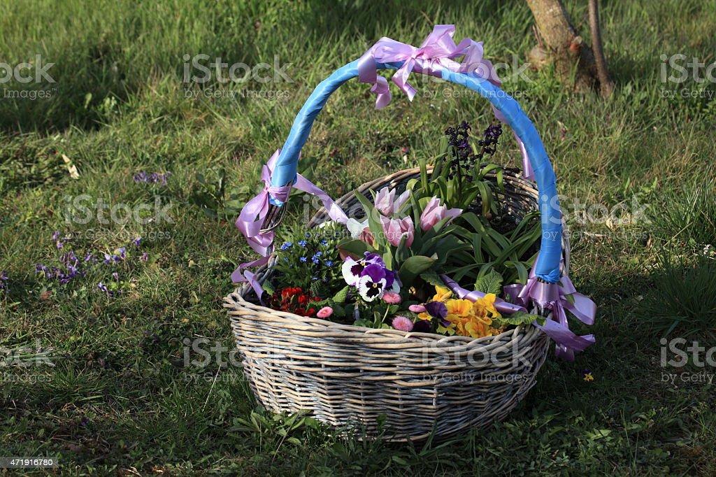 Fr?hlingsblumen im Korb stock photo