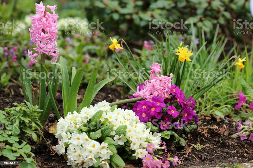 Frühlingsblumen stock photo