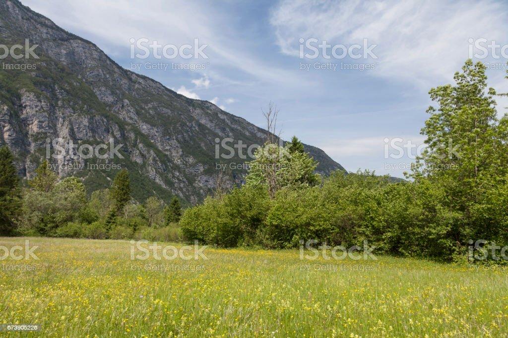 Frühlingswiese stock photo