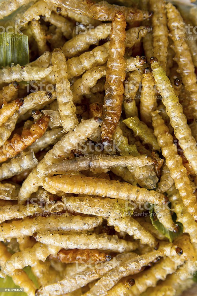 Fried bamboo larvae. Close-up royalty-free stock photo