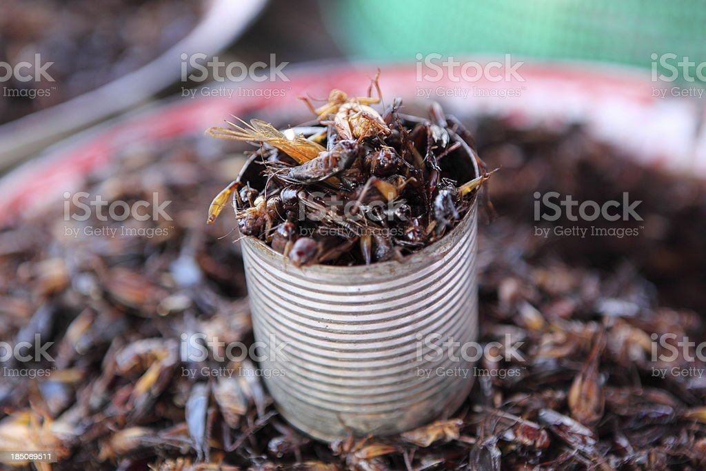 Fried cockroach royalty-free stock photo