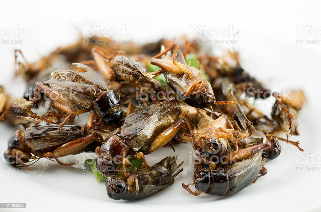 Fried Cricket royalty-free stock photo