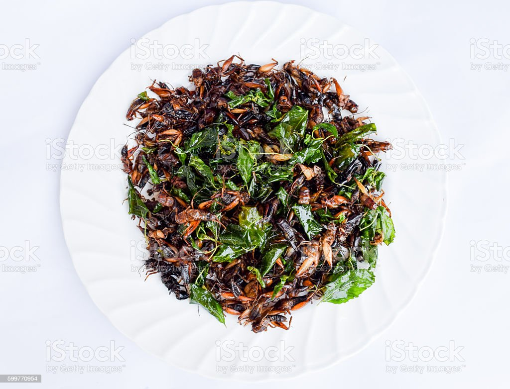 fried exotic insects stock photo