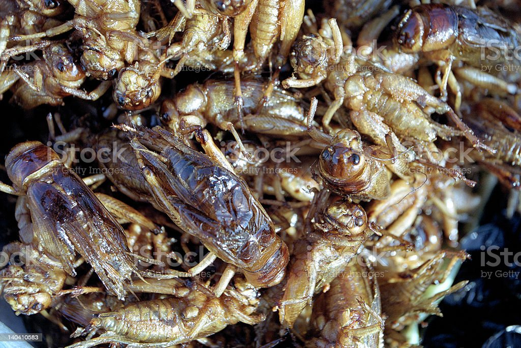 Fried grasshopers royalty-free stock photo
