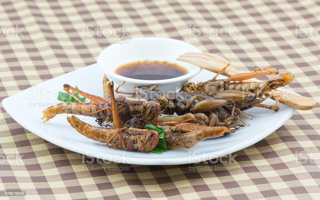 Fried grasshopper on white dish stock photo