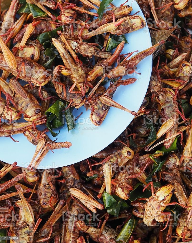 Fried grasshopper with salty Kaffer lime leaves stock photo