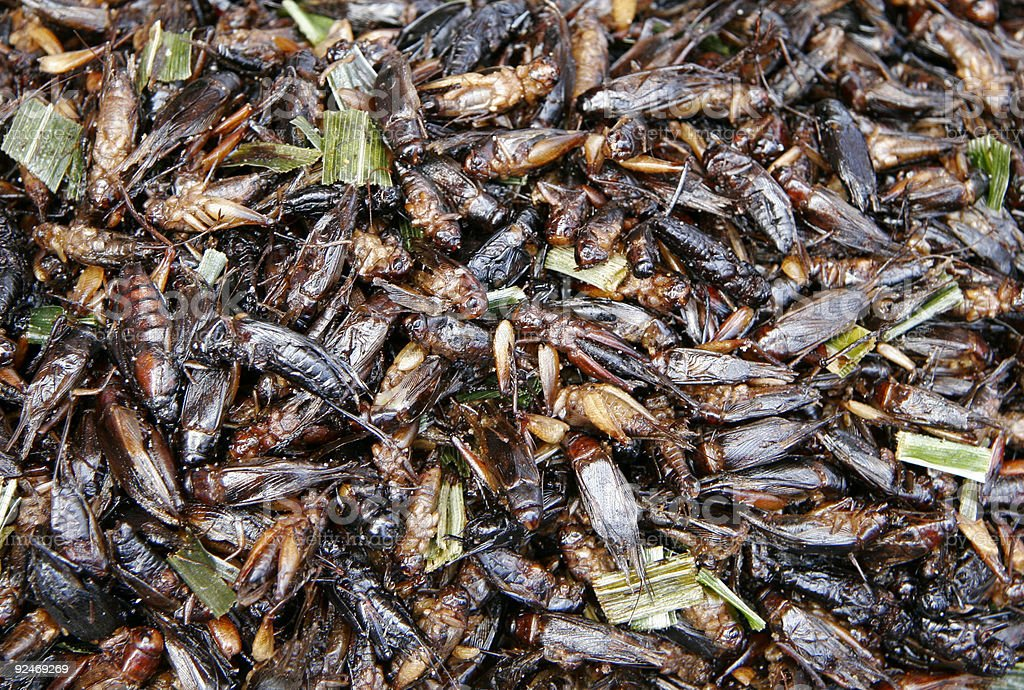 Fried grasshoppers 1 royalty-free stock photo