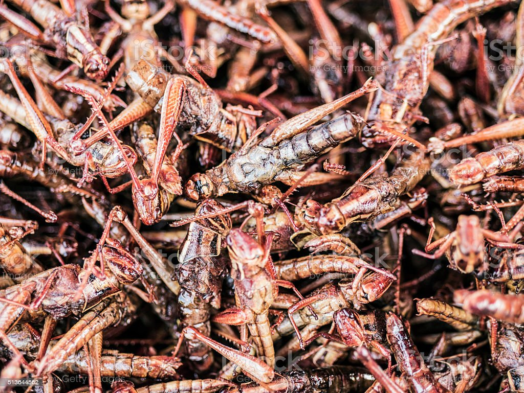Fried grasshoppers Bangkok Thailand stock photo