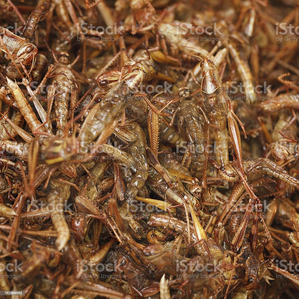 Fried grasshoppers on eastern market royalty-free stock photo