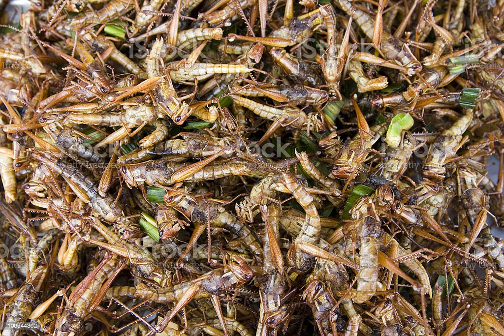 Fried grasshoppers royalty-free stock photo