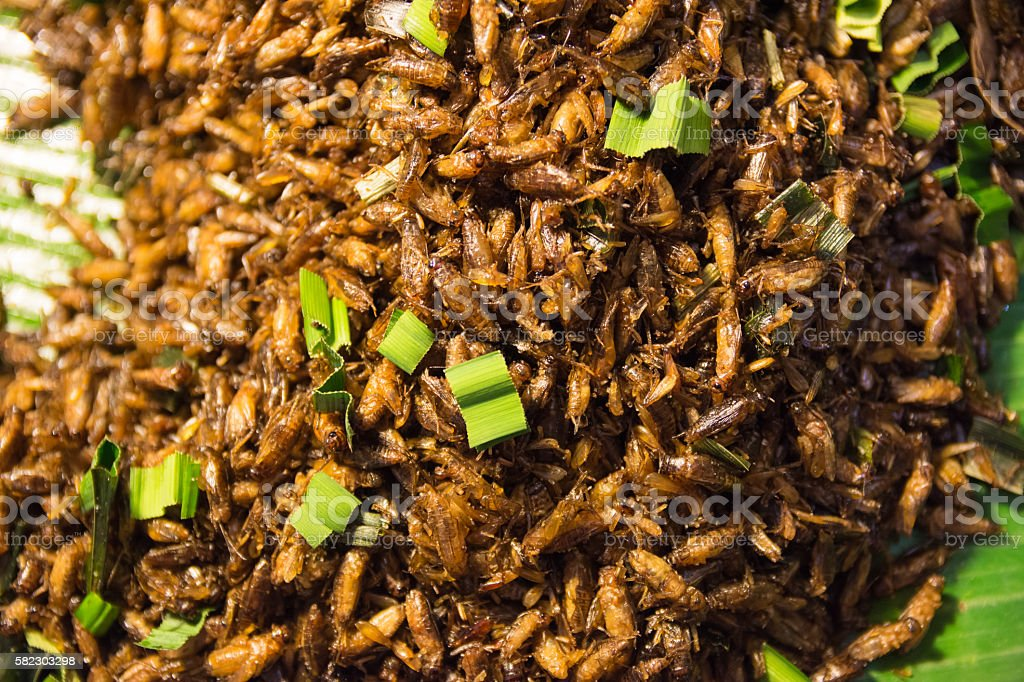 Fried insect food in thailand stock photo