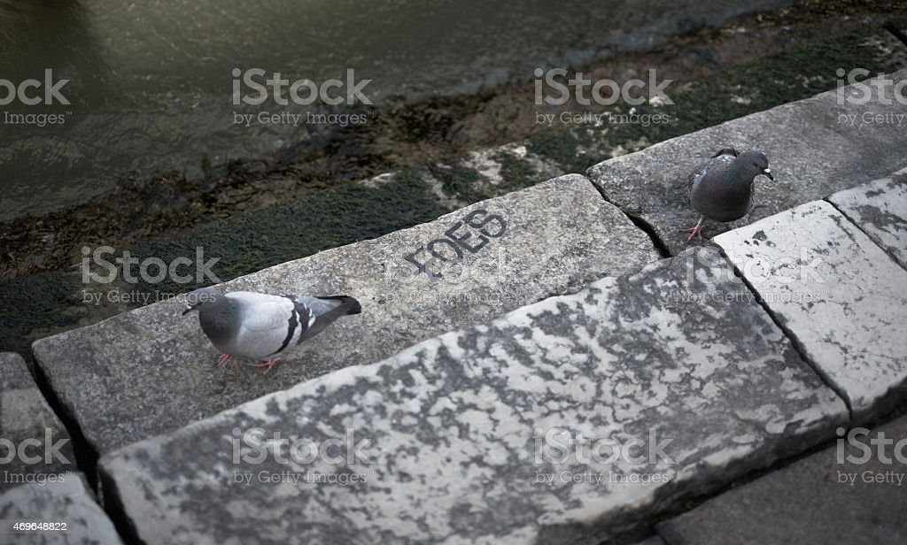 Friend or foe? Funny pigeon scene stock photo