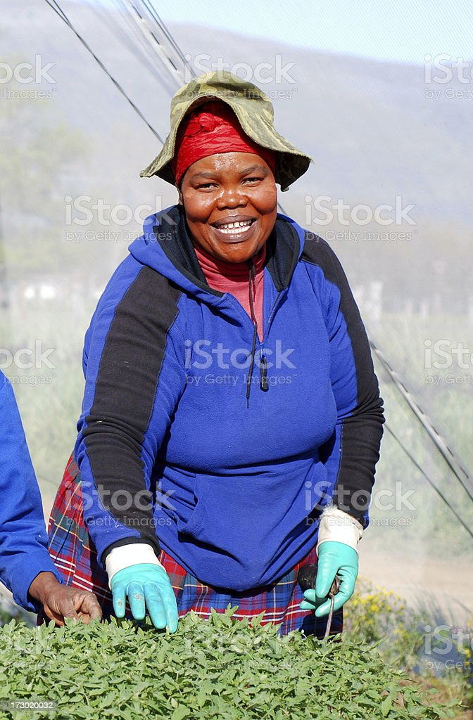 Friendly African tomato worker royalty-free stock photo