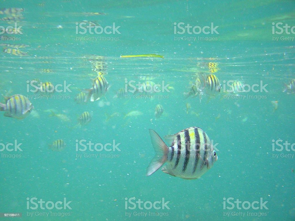 Friendly Fish royalty-free stock photo