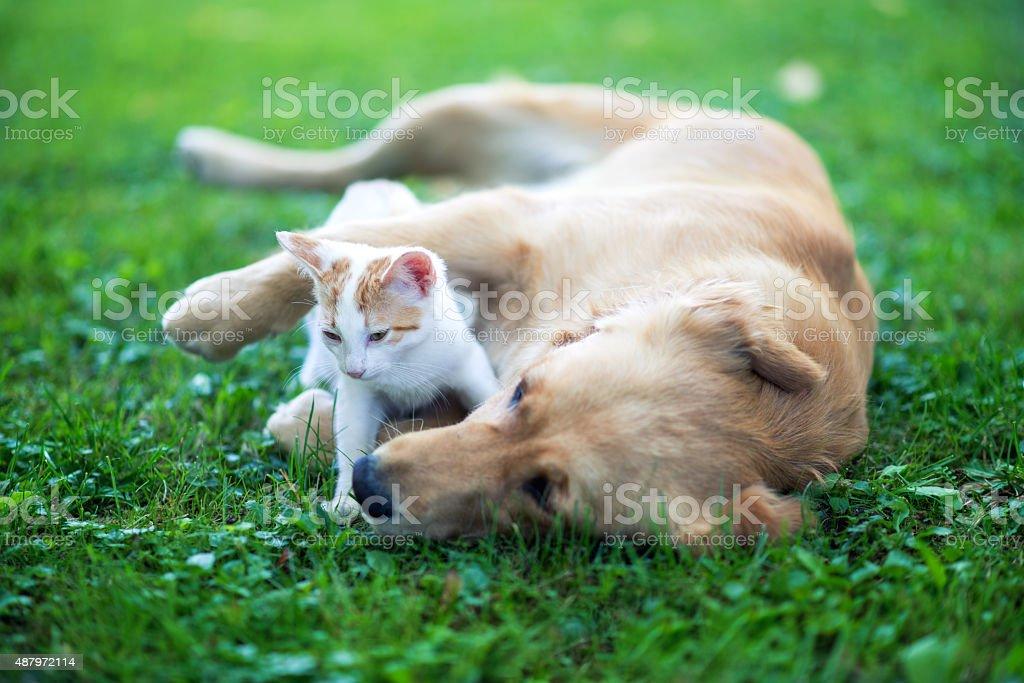 Friendly hug stock photo