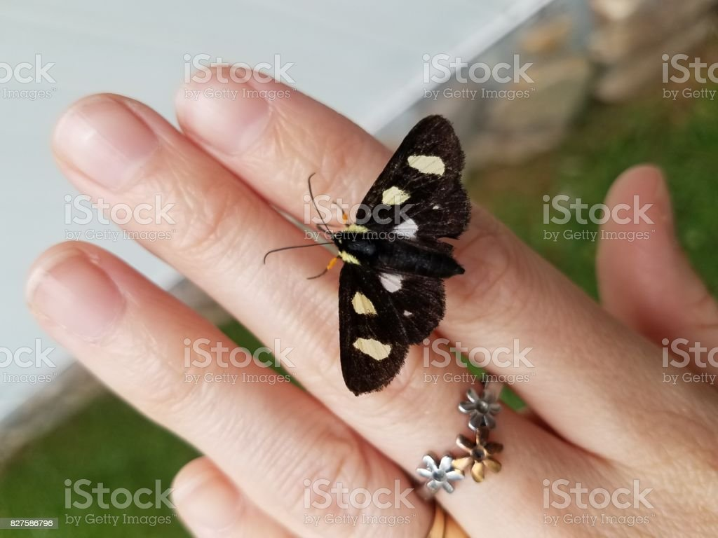 Friendly Moth stock photo