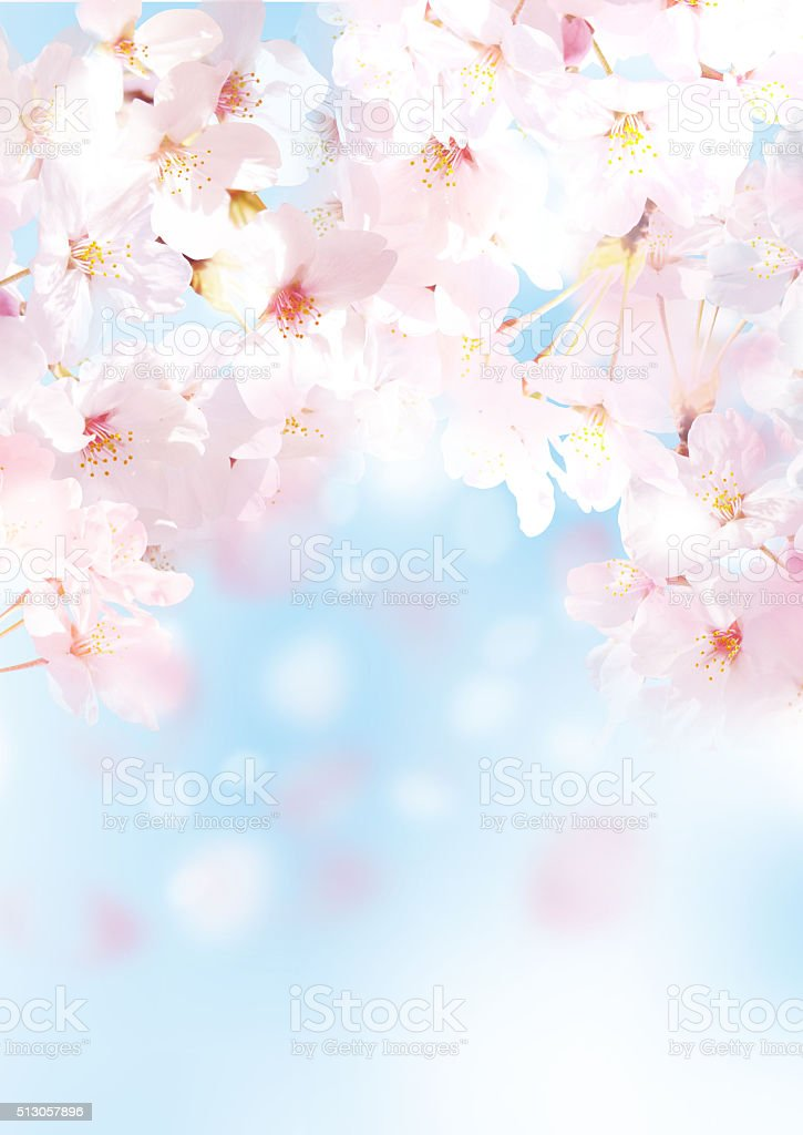 Friendly Sakura stock photo