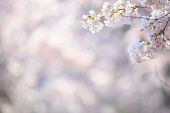 Friendly spring background