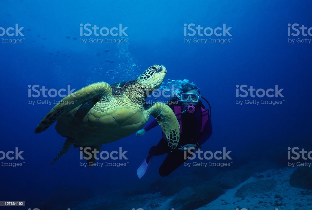 Friendly Turtle royalty-free stock photo