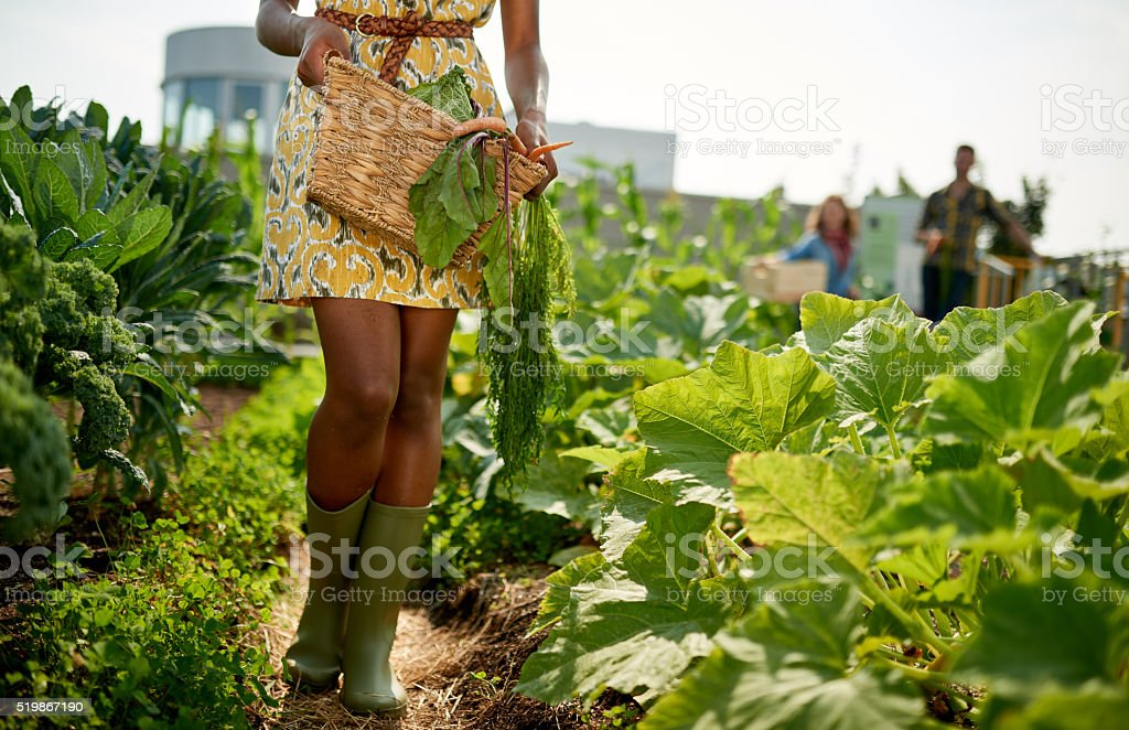 Friendly woman harvesting fresh vegetables from the rooftop greenhouse garden stock photo