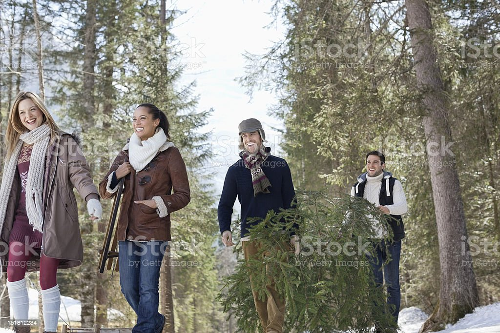 Friends carrying fresh cut Christmas tree in woods royalty-free stock photo