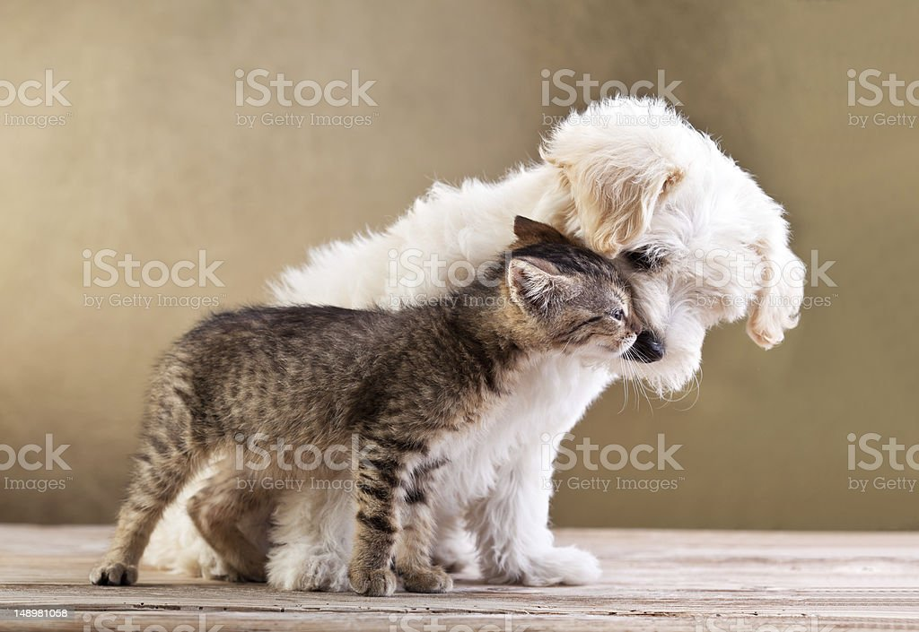Friends - dog and cat together stock photo